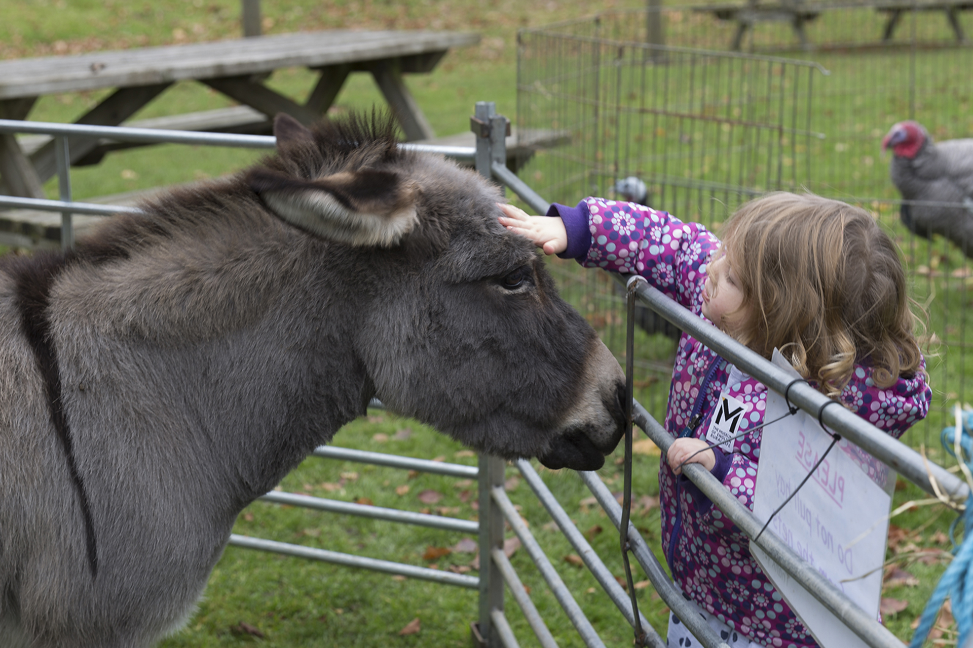 The MERL Winter Warmer - petting zoo